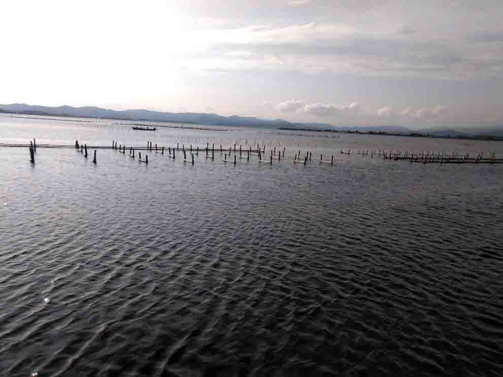 浜名湖釣りポイント乙女園カキ棚