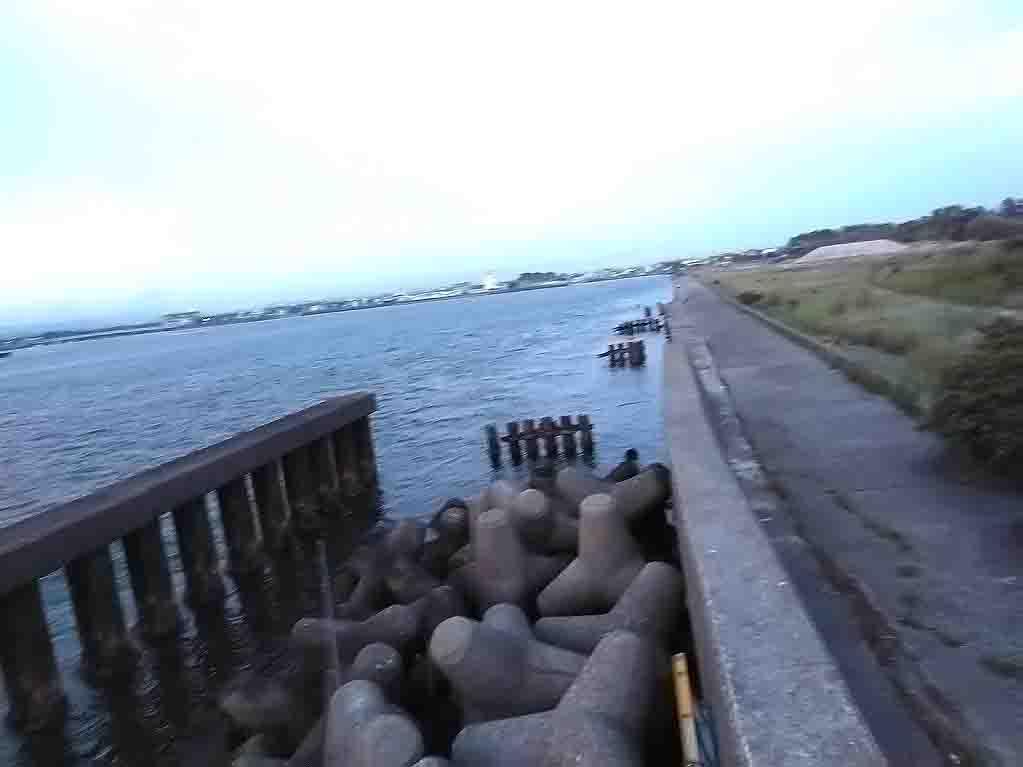 浜名湖ダンゴ釣り