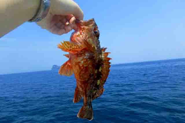 浜松海釣り公園カサゴ