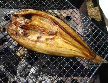 冬サビキ釣れる魚