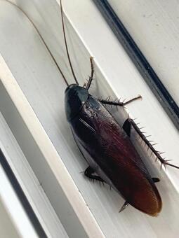 ゴキブリ怖い都市伝説