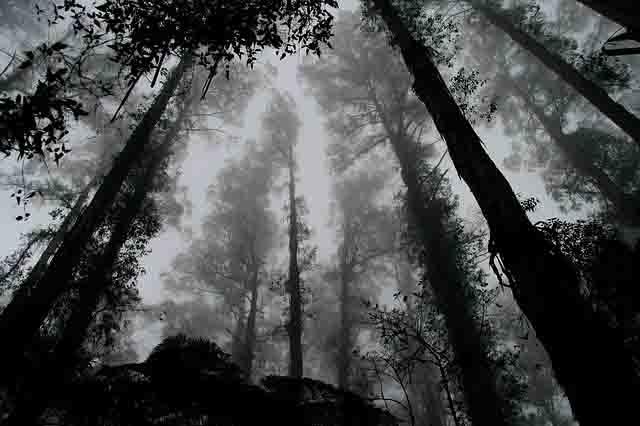 静岡県東部心霊スポット八丁池の心霊写真