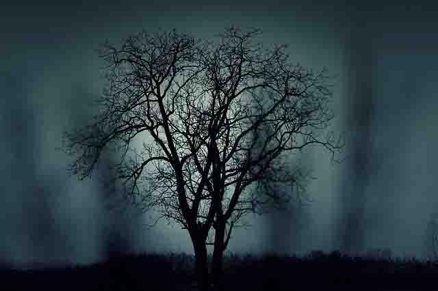丸山ダム心霊スポット心霊写真木が怖い