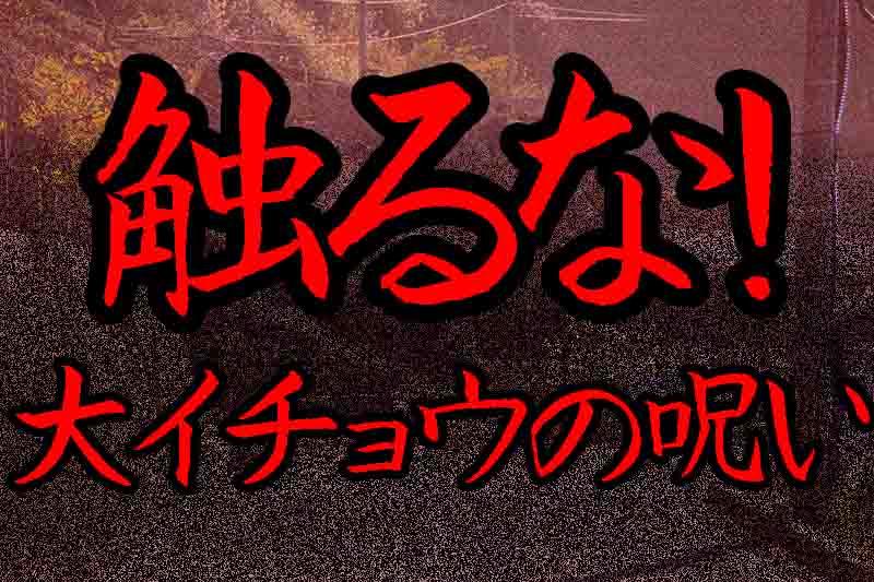 三重県津市にある呪いの大イチョウ。決して触ってはいけない心霊の木