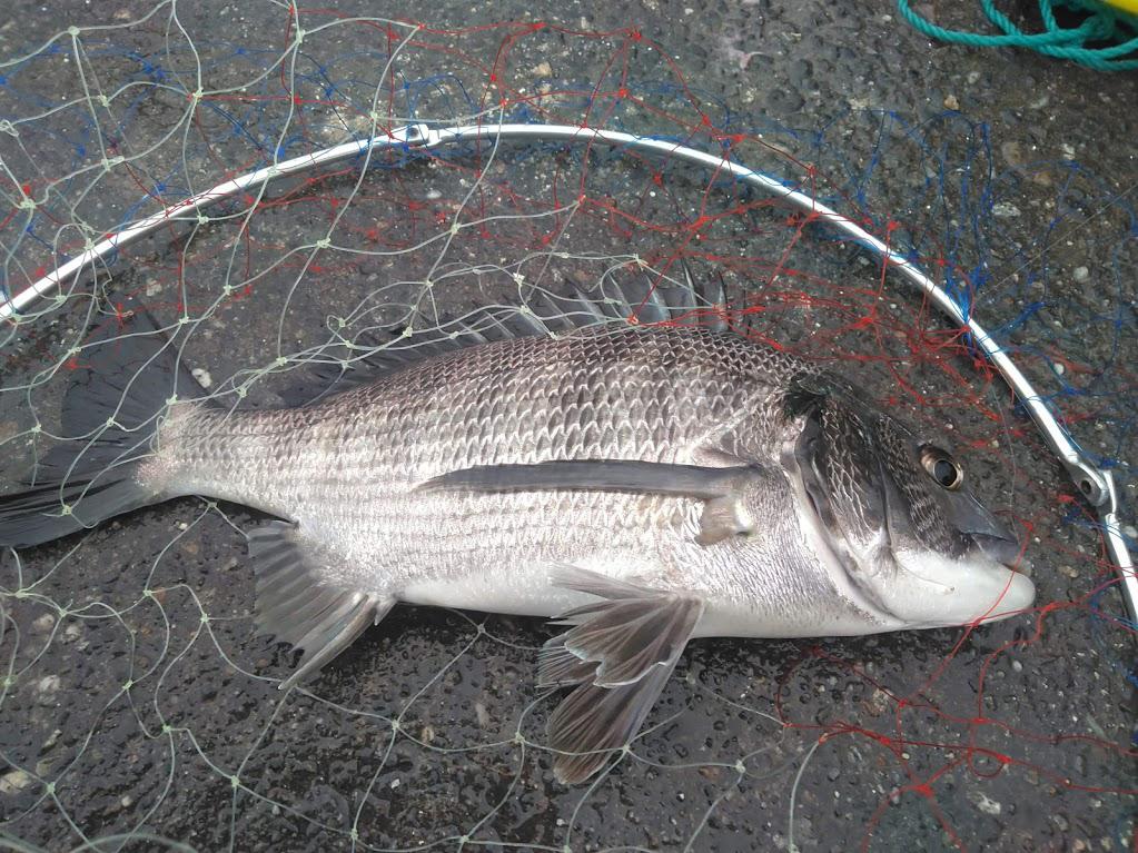 ヘチ釣り基本入門