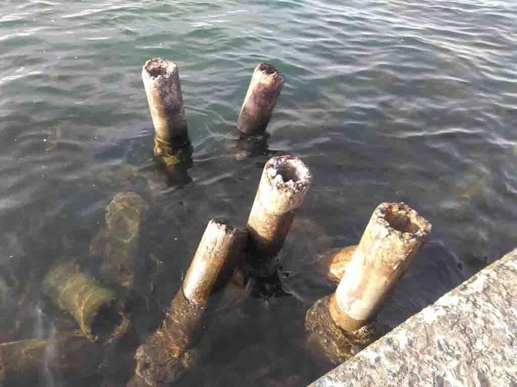 浜名湖フカセ釣り