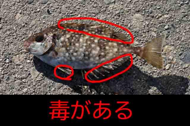 新居海釣り公園毒魚
