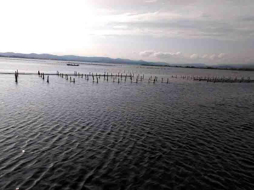 浜名湖ちょい投げポイント